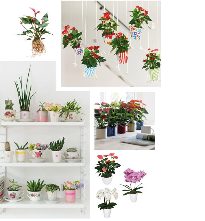 Moodboard Kleine pot maat Anthurium en Orchidee