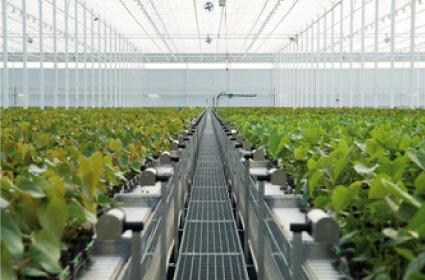 Groei van Anthurium en Orchidee in kas