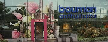 Bouman Anthurium