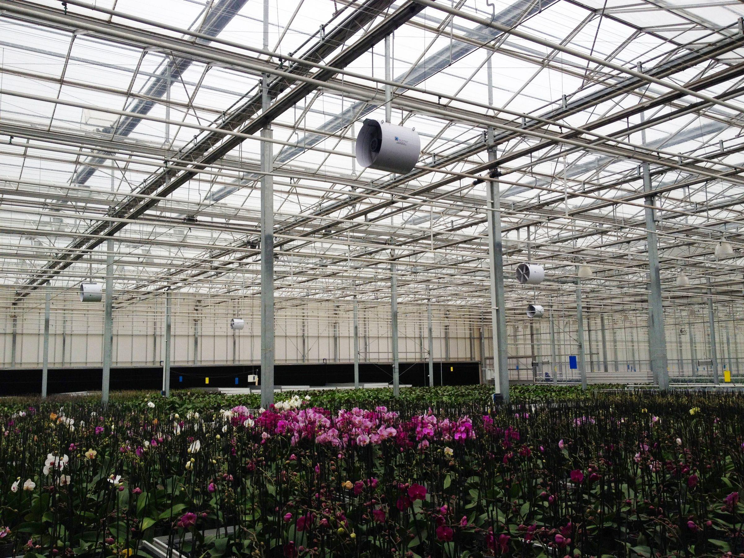 phalaenopsis ventilator