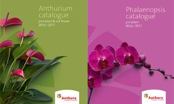Anthura catalogue anthurium en phalaenopsis 2016